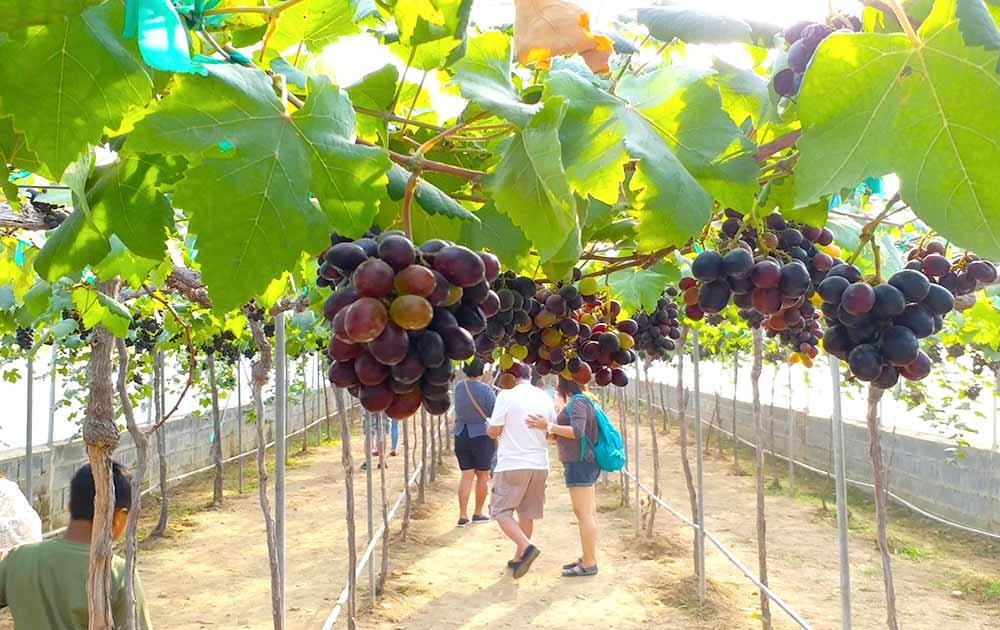 Silverlake Vineyard Pattaya winery