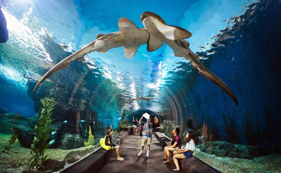 sharks swimming undertwater world pattaya rental villa klang
