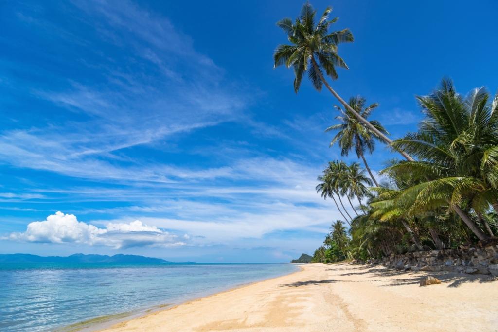 How Relax Pattaya Plan Wonderful Vacation koh samet beach shore palm trees blue skies